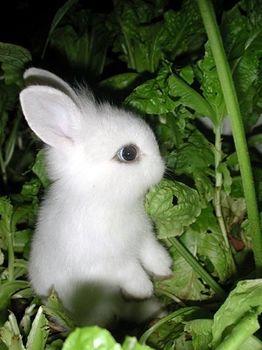 萌萌小动物图片!你也可以发哟.